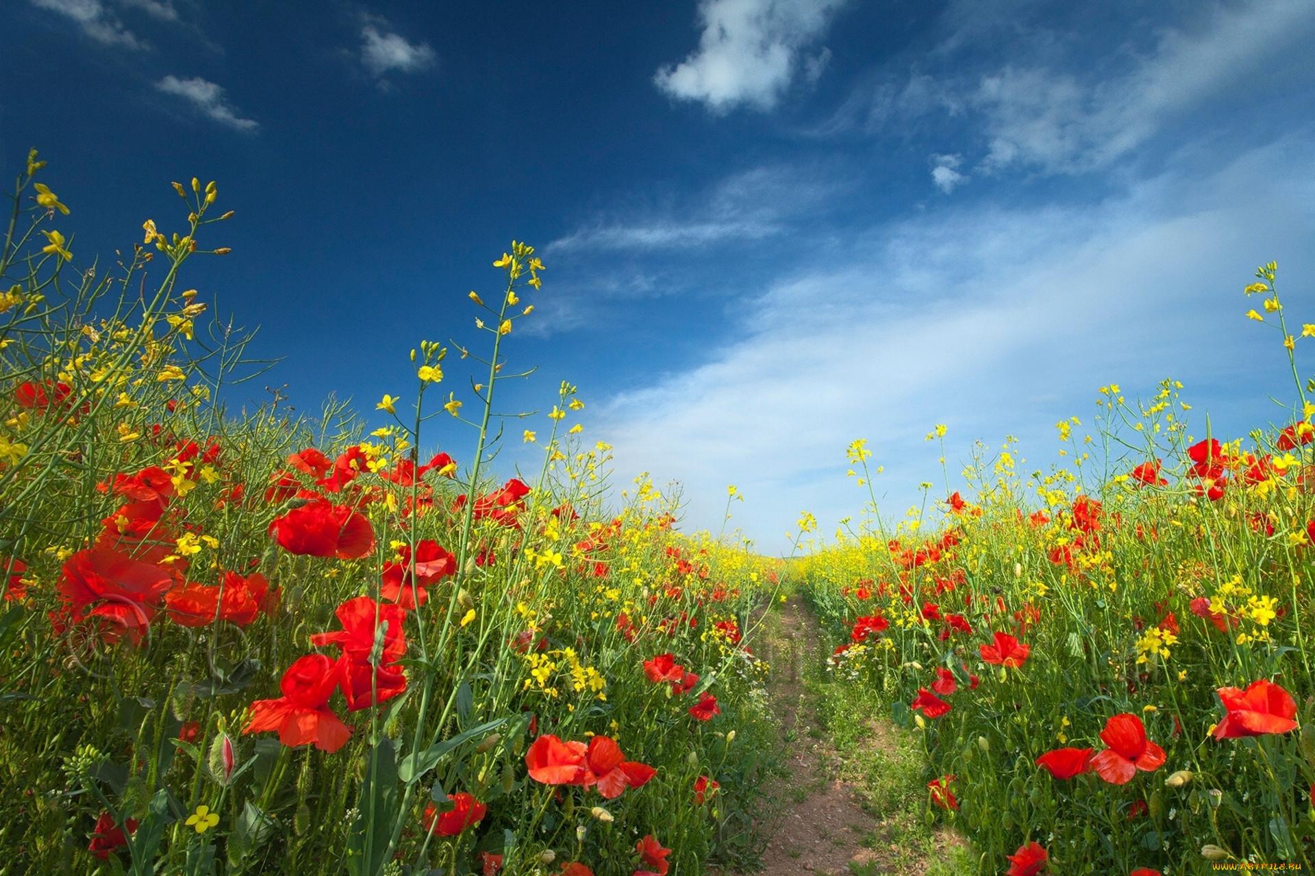 это когда вертикальное фото цветы на фоне пейзажа полевые много переезжала